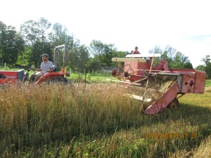 Combining with an Allis Chalmers All-Crop Harvester